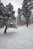 NM-2011-031: Cloudcroft, Otero County, NM, USA