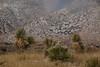 NM-2013-544: , Dona Ana County, NM, USA