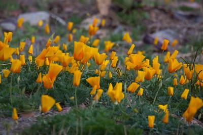 NM-2012-021: Steins, Hidalgo County, NM, USA
