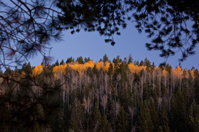 NM-2011-302: Lincoln National Forest, Otero County, NM, USA