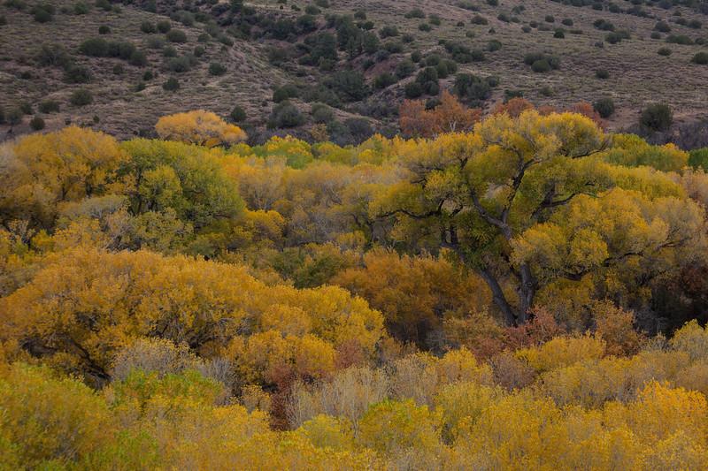 NM-2012-296: Gila River, Grant County, NM, USA