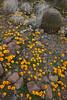 NM-2010-100: Florida Mountains, Luna County, NM, USA