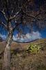 NM-2010-128: Florida Mountains, Luna County, NM, USA