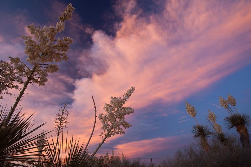 NM-2010-176: Santa Teresa, Dona Ana County, NM, USA