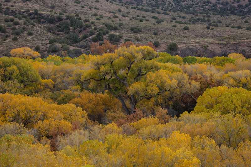 NM-2012-295: Gila River, Grant County, NM, USA