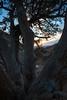 NM-2013-132: Achenbach Canyon, Dona Ana County, NM, USA
