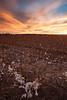 NM-2012-340: La Union, Dona Ana County, NM, USA