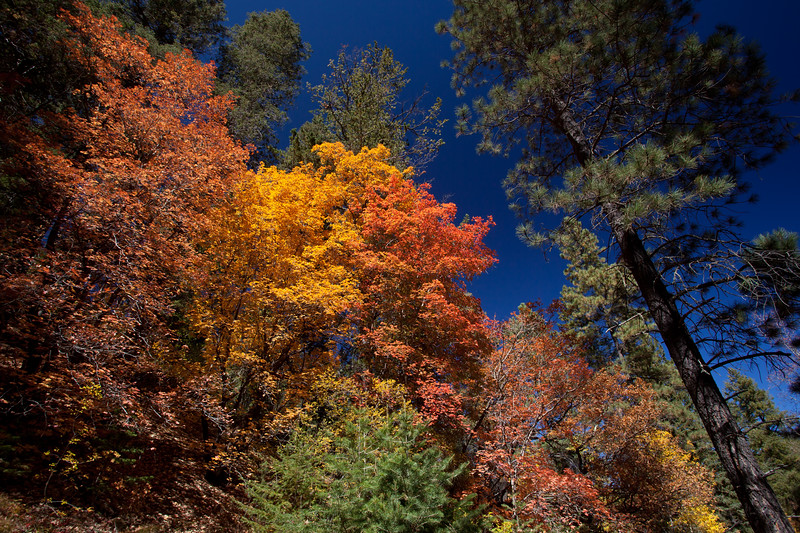 NM-2011-327: Lincoln National Forest, Otero County, NM, USA
