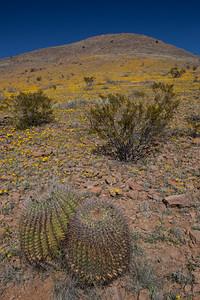 NM-2012-035: Steins, Hidalgo County, NM, USA