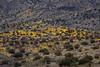 NM-2012-096: , Dona Ana County, NM, USA