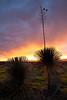NM-2010-122: Baylor Canyon, Dona Ana County, NM, USA