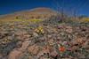 NM-2012-033: Steins, Hidalgo County, NM, USA