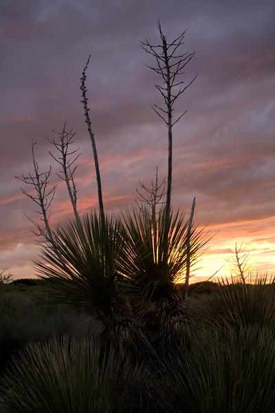 NM-2008-063: Santa Teresa, Dona Ana County, NM, USA