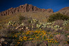 NM-2012-069: Rockhound State Park, Luna County, NM, USA