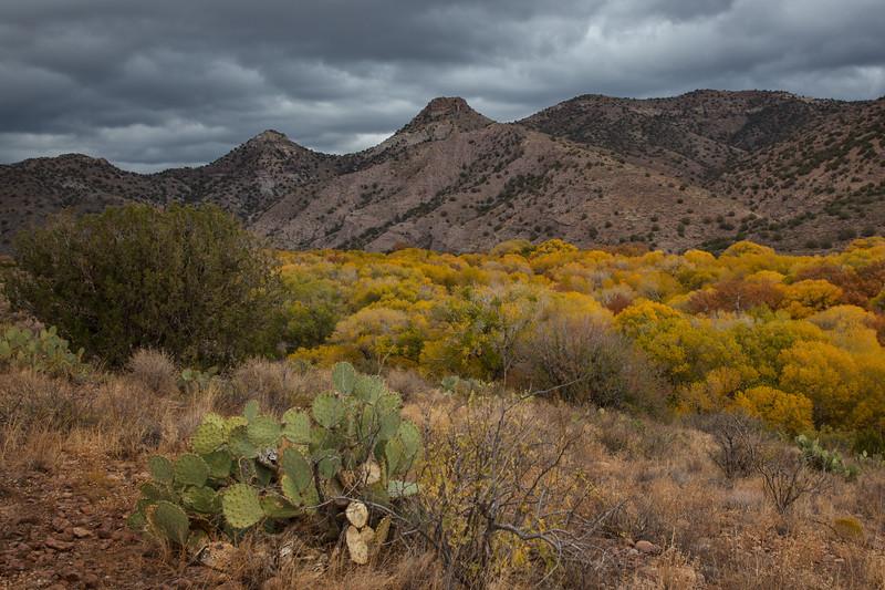 NM-2012-292: Gila River, Grant County, NM, USA
