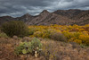 NM-2012-292: Gila River, Grant County, NM, USA