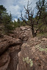 NM-2011-157: Gila National Forest, Grant County, NM, USA