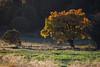 NM-2011-308: Cox Canyon, Otero County, NM, USA