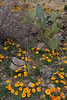 NM-2010-104: Florida Mountains, Luna County, NM, USA