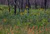 NM-2013-448: Gila Wilderness, Catron County, NM, USA