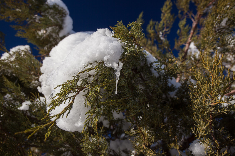 NM-2013-036: Bootheel, Coronado National Forest, NM, USA