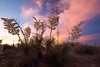 NM-2010-177: Santa Teresa, Dona Ana County, NM, USA
