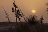NM-2013-254: Santa Teresa, Dona Ana County, NM, USA