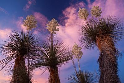 NM-2010-178: Santa Teresa, Dona Ana County, NM, USA