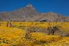 NM-2012-098: , Dona Ana County, NM, USA