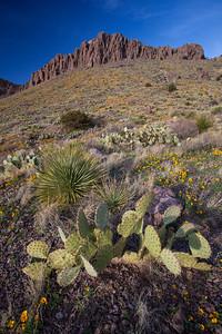 NM-2012-070: Rockhound State Park, Luna County, NM, USA