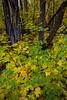 NM-2013-490: Cloudcroft, Otero County, NM, USA