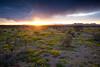 NM-2010-118: Baylor Canyon, Dona Ana County, NM, USA