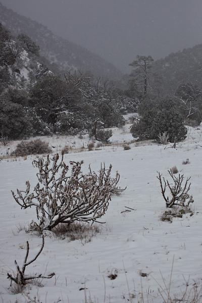 NM-2011-382: Gila National Forest, Sierra County, NM, USA