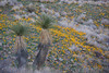 NM-2012-025: Steins, Hidalgo County, NM, USA