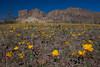NM-2012-027: Steins, Hidalgo County, NM, USA