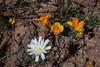 NM-2012-037: Steins, Hidalgo County, NM, USA