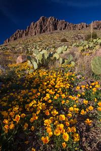 NM-2012-073: Rockhound State Park, Luna County, NM, USA