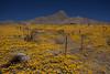 NM-2012-101: , Dona Ana County, NM, USA