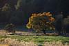 NM-2011-307: Cox Canyon, Otero County, NM, USA
