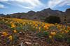 NM-2012-089: Florida Mountains, Luna County, NM, USA