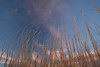 NM-2011-093: San Miguel, Dona Ana County, NM, USA