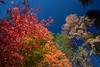 NM-2013-485: Karr Canyon, Otero County, NM, USA