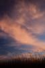 NM-2011-095: San Miguel, Dona Ana County, NM, USA