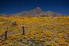NM-2012-102: , Dona Ana County, NM, USA