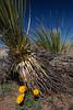 NM-2012-015: Steins, Hidalgo County, NM, USA