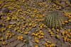 NM-2012-039: Steins, Hidalgo County, NM, USA