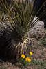 NM-2012-013: Steins, Hidalgo County, NM, USA