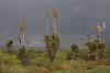 NM-2006-003: , Hidalgo County, NM, USA
