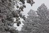 NM-2011-045: Benson Ridge, Otero County, NM, USA
