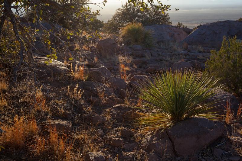 NM-2013-247: City of Rocks S.P., Grant County, NM, USA